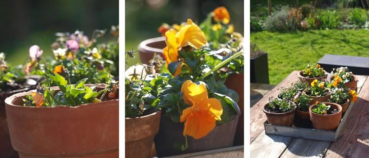 Blomster til forårshaven