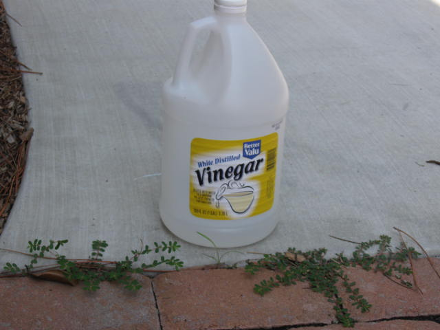 Driveway Weed Killer >> Gardening From the Ground Up: IN PRAISE OF VINEGAR
