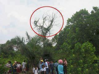 """لفظ الجلالة """"الله"""" واضح جدا علي هذه الشجرة ، سبحان الله !!"""