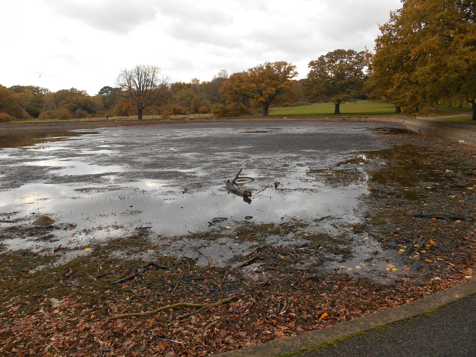 Nature Notes and Observations: Southampton Common - Empty ...