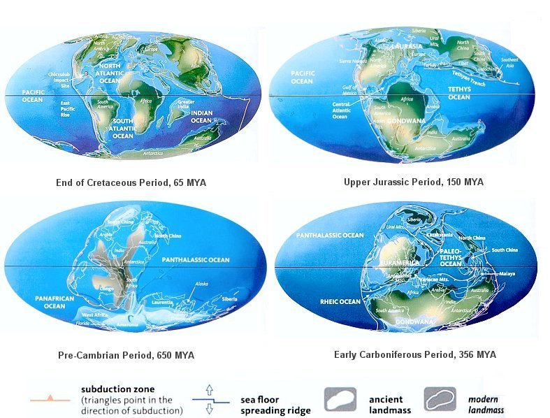 continental drift theory and s effects evolution Continental drift can be explained through the theory of plate  it is more likely  that they evolved side by side, but in geographic isolation.