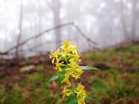 雫の黄色い花
