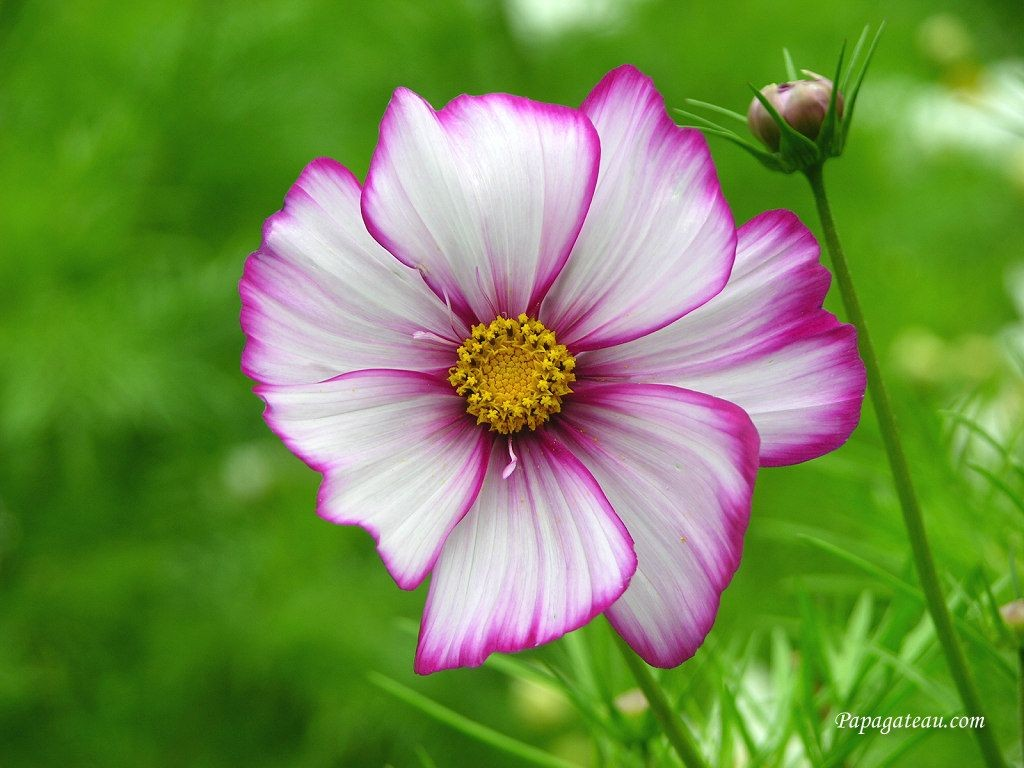 Funny Pictures Gallery: Free flower backgrounds, free ...
