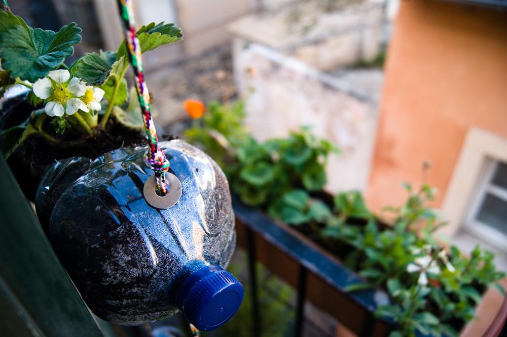 Подвесное кашпо для сада из пластиковых бутылок
