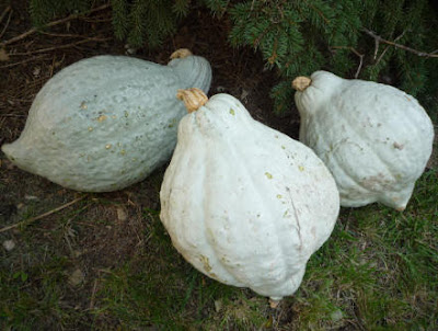 Hubbard Squash - Fruits And Vegetables