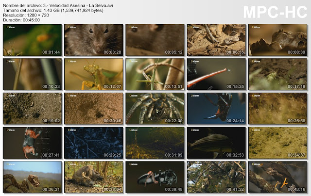 NATGEO HD|Velocidad Asesina|3/3|720p|MEGA