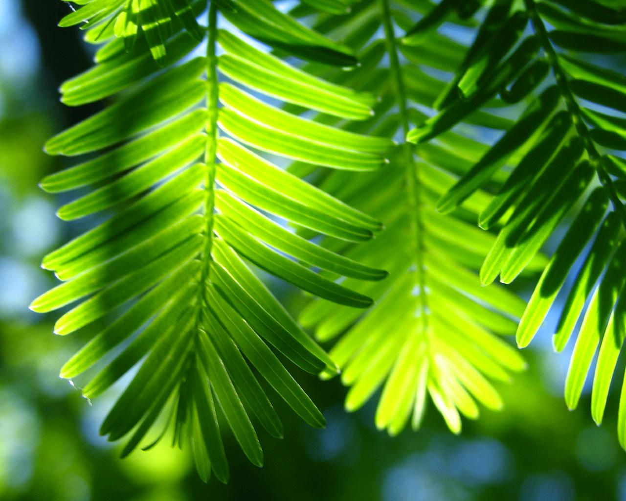 http://1.bp.blogspot.com/-uaWTvJQJx_8/Tee8jPVsz6I/AAAAAAAAAJg/0V9HoGjIY58/s1600/nature_wallpaper_tropicalparadise1280x1024.jpg
