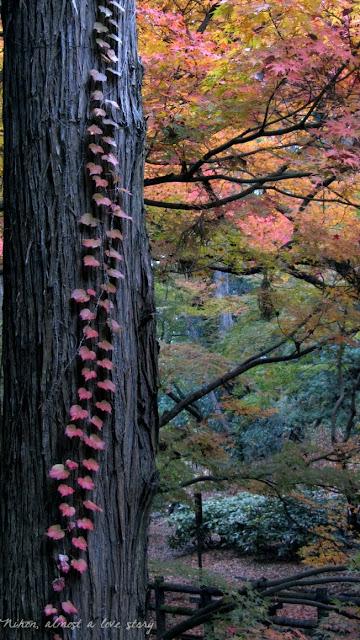 Red leaves at Kitano Tenman-gu