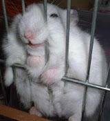 Hamster sorrindo - Ele está preso e sorri, porque ficar triste se você está livre.