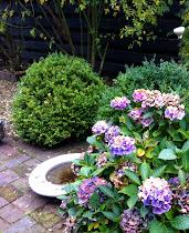 Höst i en Ulla Molin-ritad trädgård