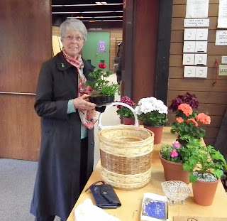 The winner of our miniature agrden at 2011 Plant Sale of Canadian Geranium and Pelargonium Society