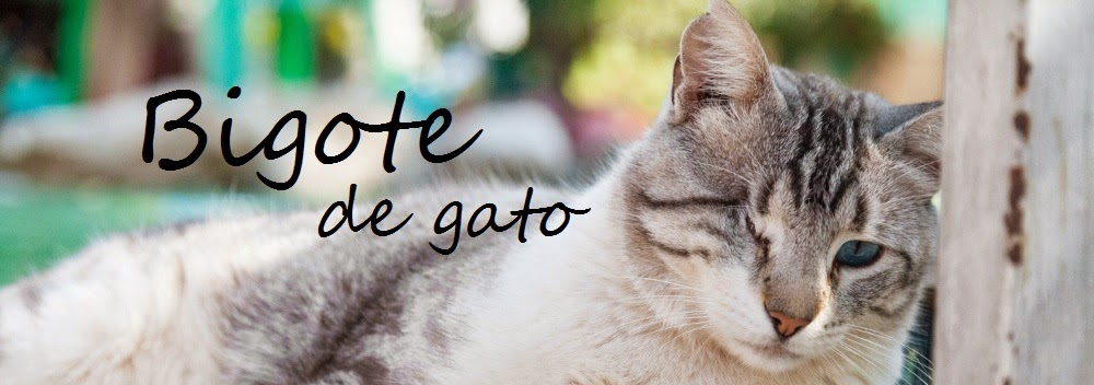 Bigote de Gato