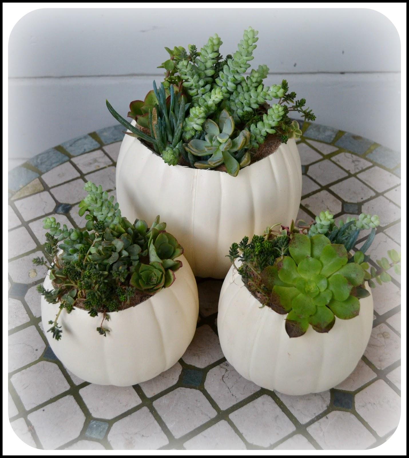 White Pumpkin Succulent Planter Project