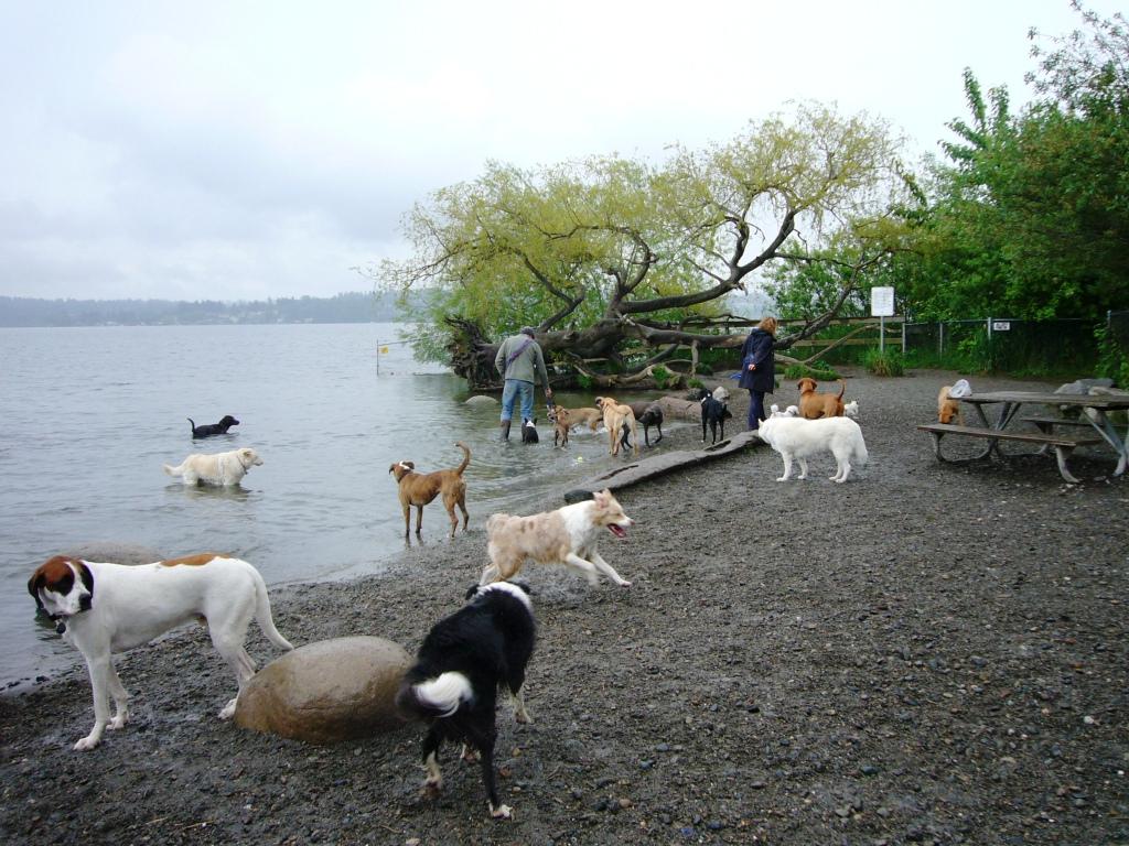 Seattle Dog Park Magnuson