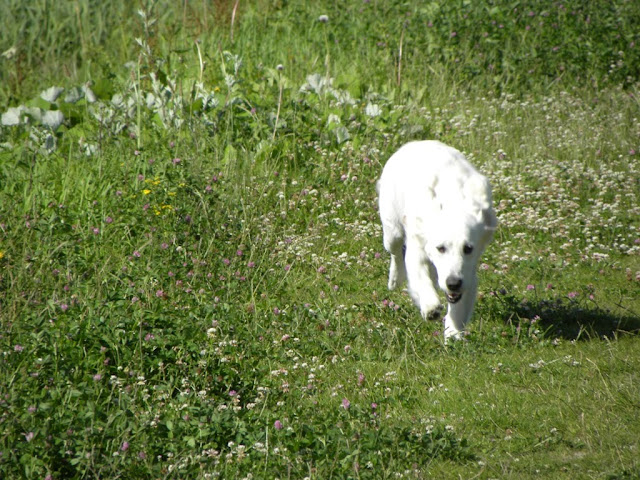 TGV dog walking adventure