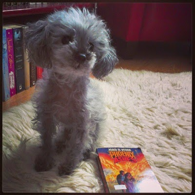 A fuzzy grey poodle, Murchie, sits on a sheepskin rug, his chin raised and his head titled to the viewer's right. Beside him sits a paperback copy of Phoenix In the Ashes by Joan D. Vinge. Its cover features a woman helping a man walk away from an enormous fire.