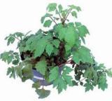 http://www.organiknusantara.com/2013/09/herbastamin-solusi-kuat-pria.html