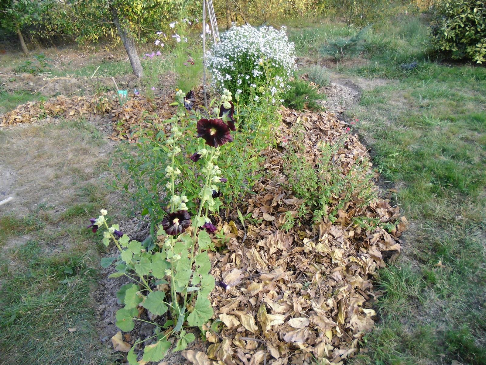 Le jardin des lutins pr paration des massifs avec l - Quand mettre du fumier de cheval dans le jardin ...