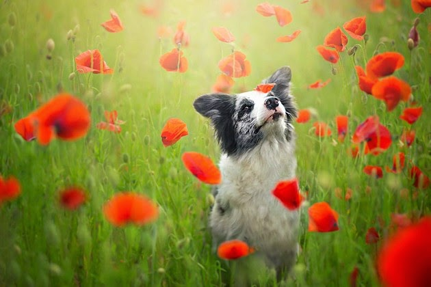 adorable dogs, Alicja Zmyslowska1