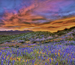 Field of Wildflowers and a sunset