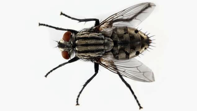 Metodos naturales para alejar las moscas eliminar - Eliminar moscas en casa ...