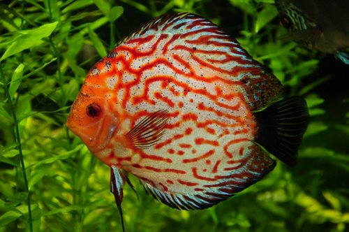 November 2012 fishes world for Labyrinth fish tank
