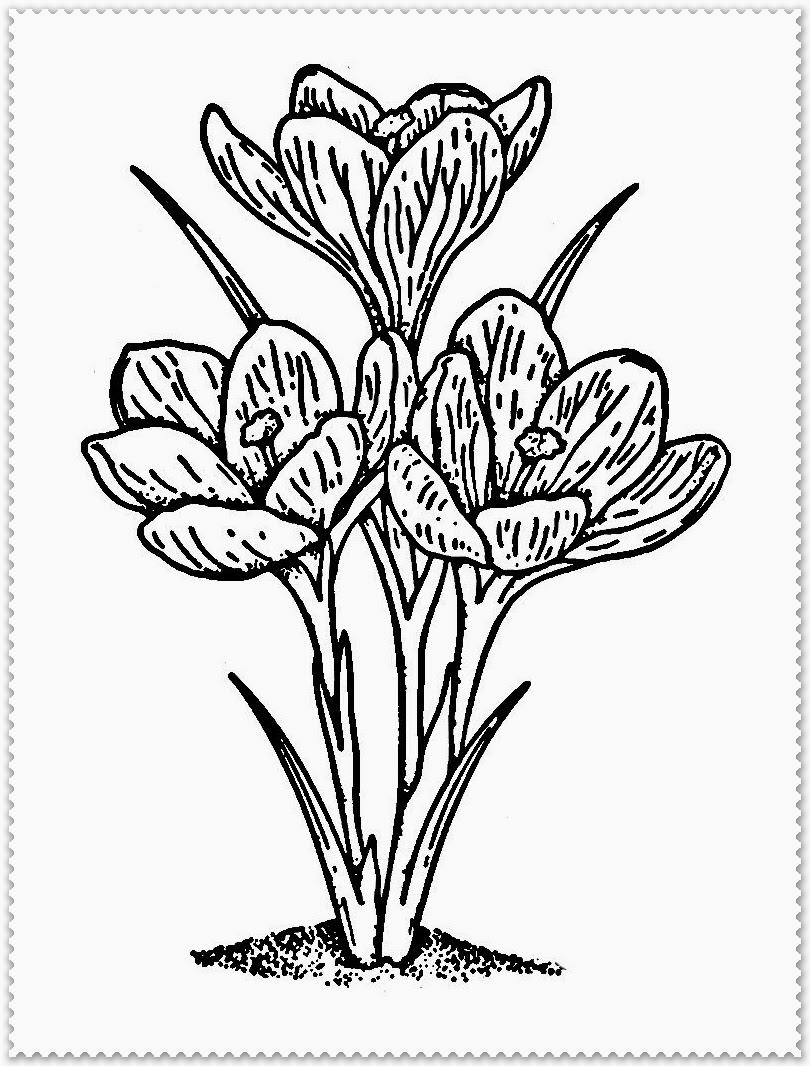 spring flowers coloring book pages