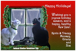 Merry Christmas Kevin, Moosey, Gracie and Zoe!