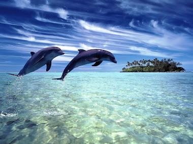 PROTEGE LOS OCEANOS