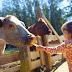 Γνωριμία με τη Φάρμα: Δραστηριότητες για Παιδιά στο Βιωματικό Paradise Park στις Αχαρνές, με 9,90€