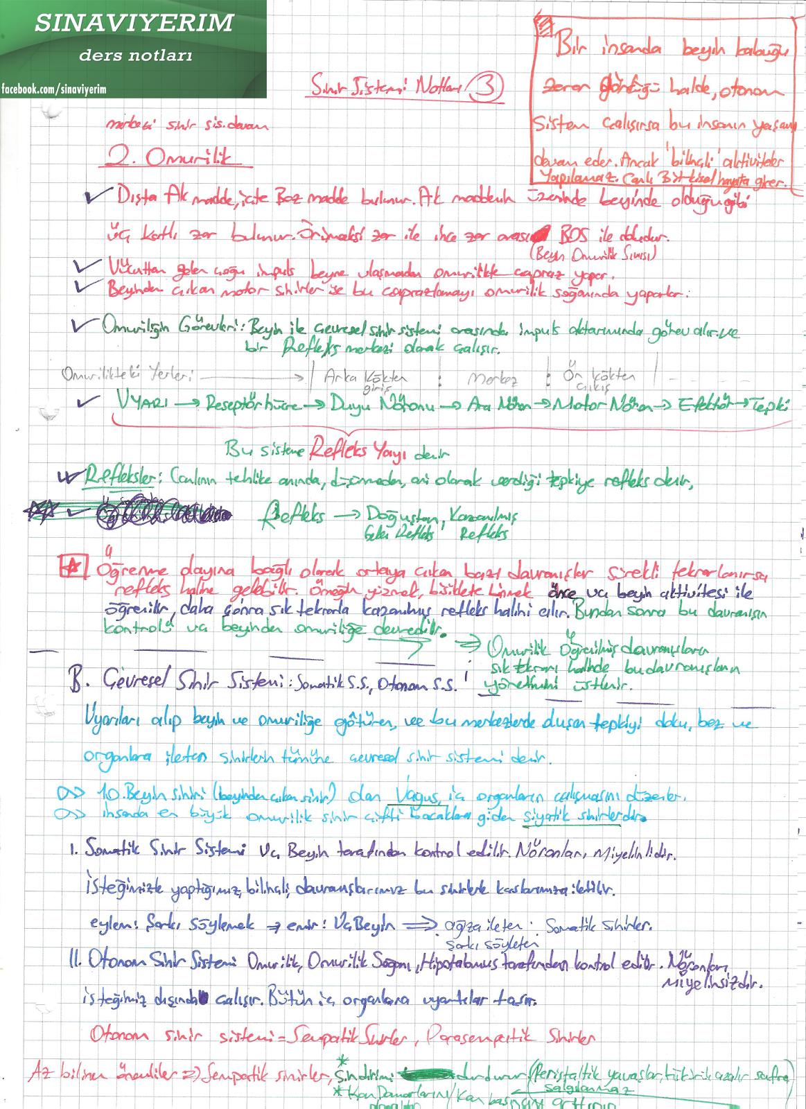 biyoloji sinir sistemi konu anlatımı
