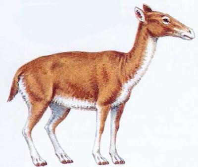 litopterna en Argentina Theosodon