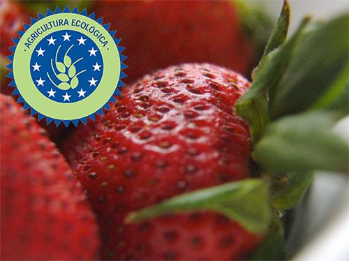 fruta, verdura, comida, ecologica, tienda on-line