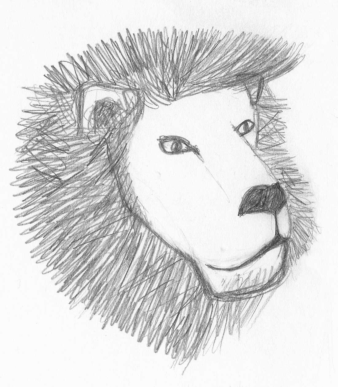 Lion Profile Drawing Lion sketch