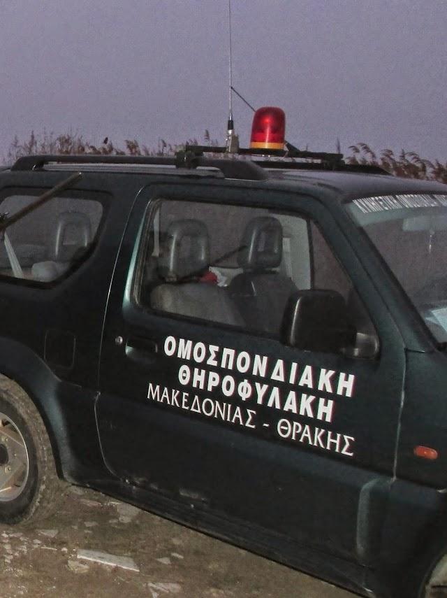 Σύλληψη λαθροθήρα ύστερα από συμπλοκή,  μετά από άριστη συνεργασία της ΚΟΜΑΘ και του Δασαρχείου.