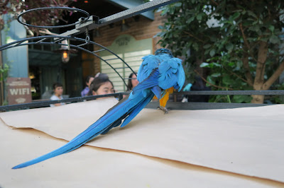 The Potting Shed Fluffy the Macaw