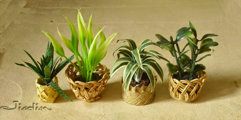 jicolin minis plantes vertes dracaena. Black Bedroom Furniture Sets. Home Design Ideas
