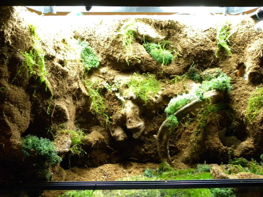 El rincon de molius hoy toca hacer un terrario o vivario - Como construir un terrario ...