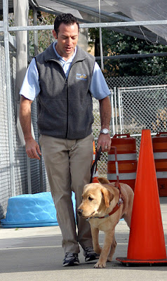 A Guide Dog instructor training a dog in our kennel