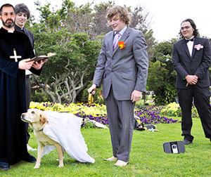 view-source:http://1.bp.blogspot.com/-ues6rdgy0o4/UuzAuIeU76I/AAAAAAAAFyc/H51zmwQTPno/s1600/dog-marriage.jpg