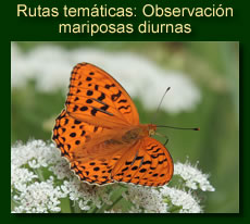 http://iberian-nature.blogspot.com.es/p/rutas-tematicas-entomologia.html