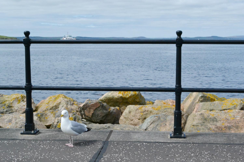 seagull largs ferry promenade