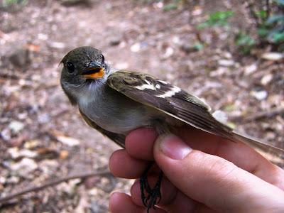 birds Nicaragua