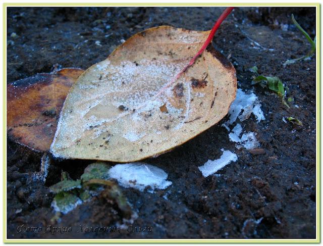 Лист и изморозь