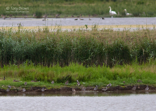 Waders, Roosting, Essex, Rspb