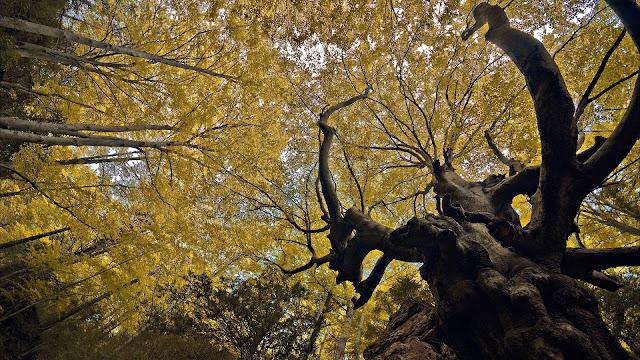 Autumn Trees Up