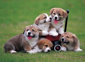Bem-Aventurado os Cachorrinhos: Bíblia da Maria Valda... kkk