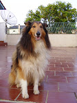 Lobo, o cão da família.