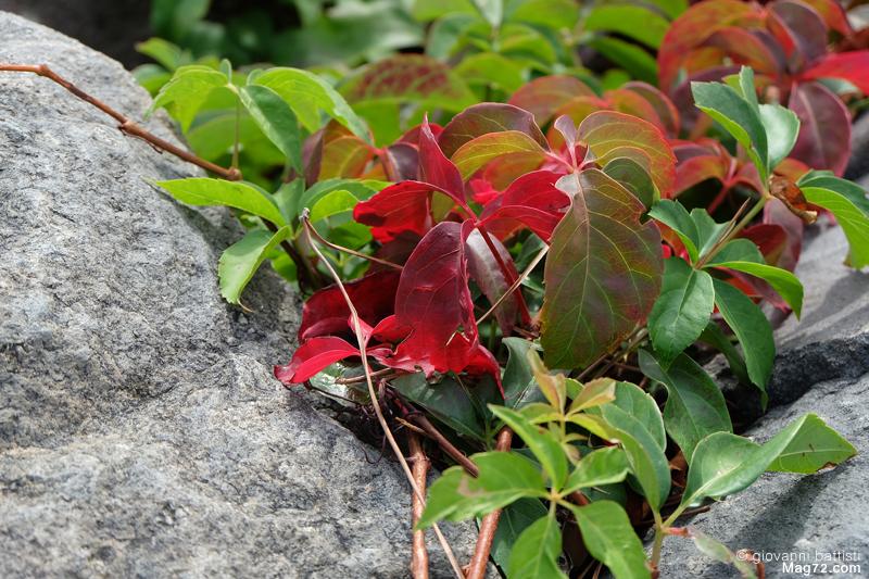 Fotografie di foglie rosse e verdi