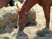 Uratuj konia